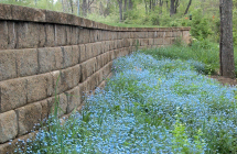 Photo Gallery of Steps & Walls